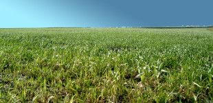 Zapytaj prawnika: Odszkodowania za szkody w rolnictwie